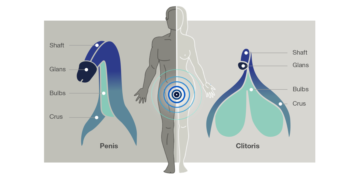 zenuwuiteinden man vrouw womanizer arcwave